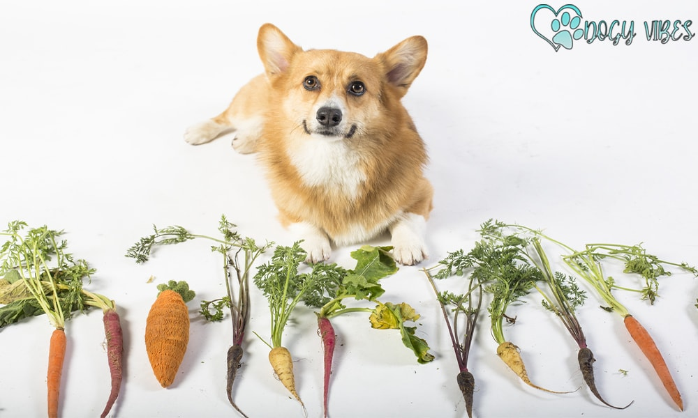 Obesity: Changes in a dog Weight-Loss Diet