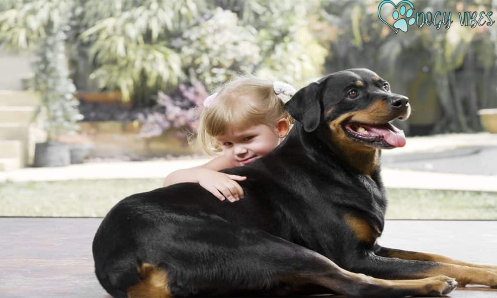 Is a Rottweiler suitable for breeding at home with children?