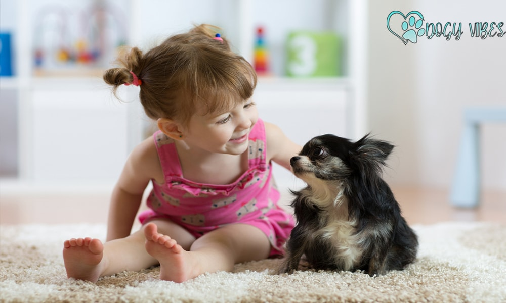 Chihuahua dog with children and other animals