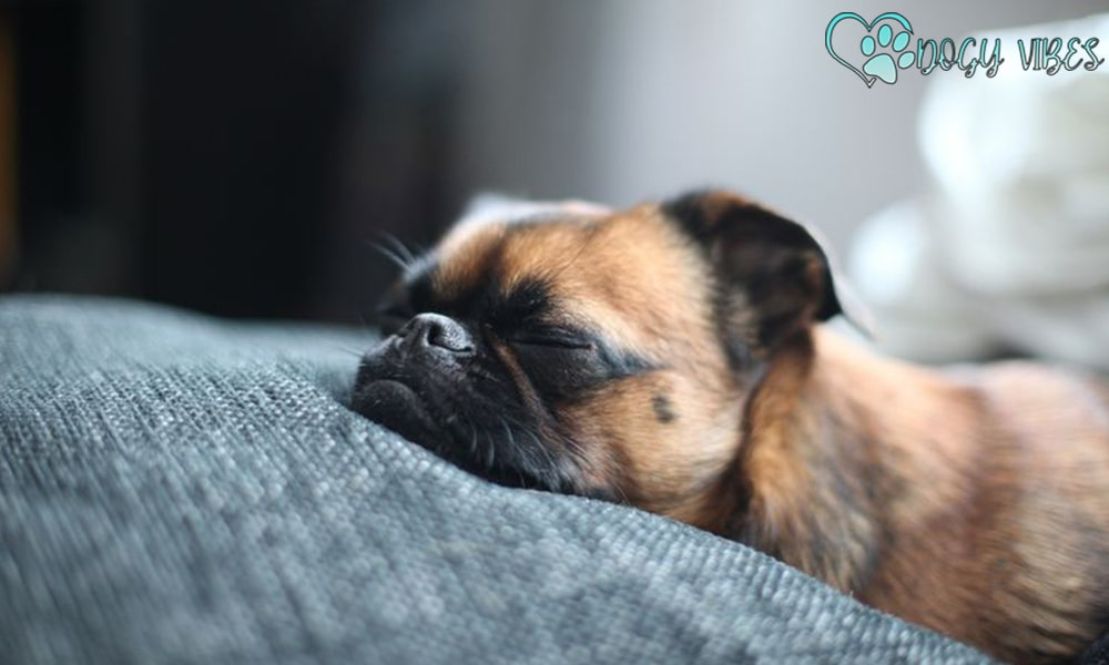 Signs that your dog is sleeping too much: