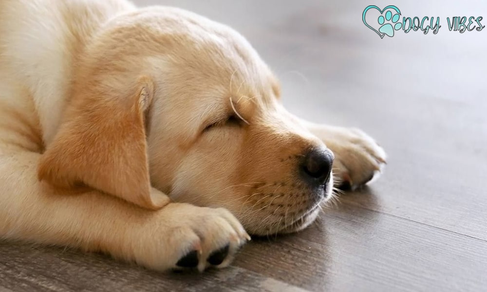 The amount of sleep a dog spends depends on