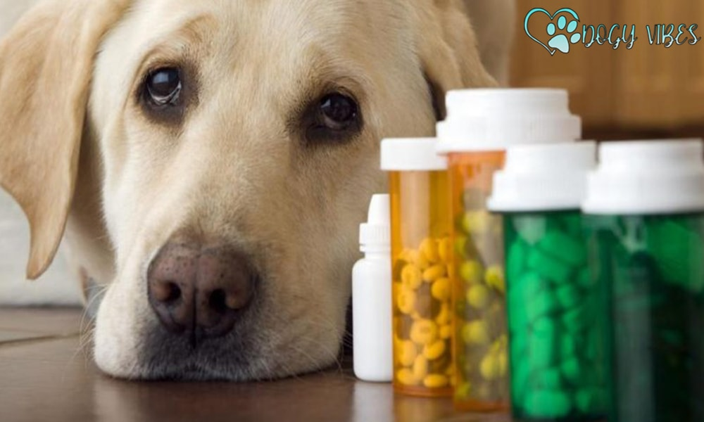 Do dogs need nutritional supplements?