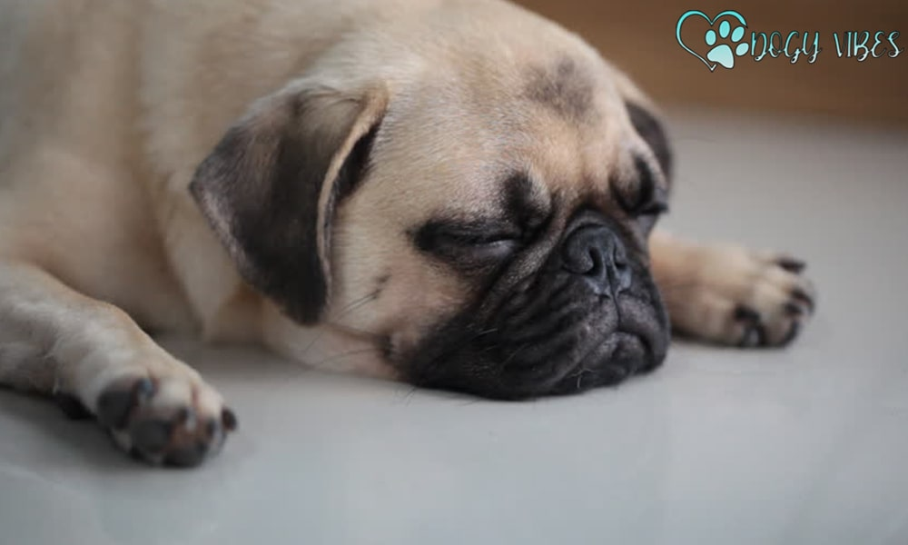 What are the health problems facing the Pug dog?