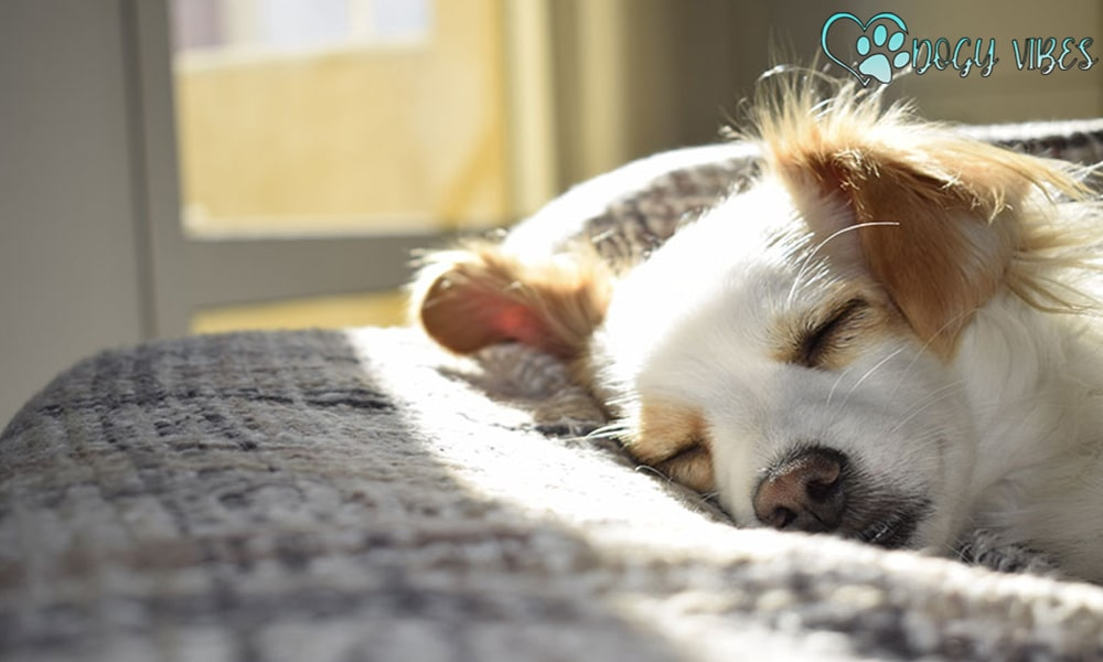 Changing the dog's sleep environment