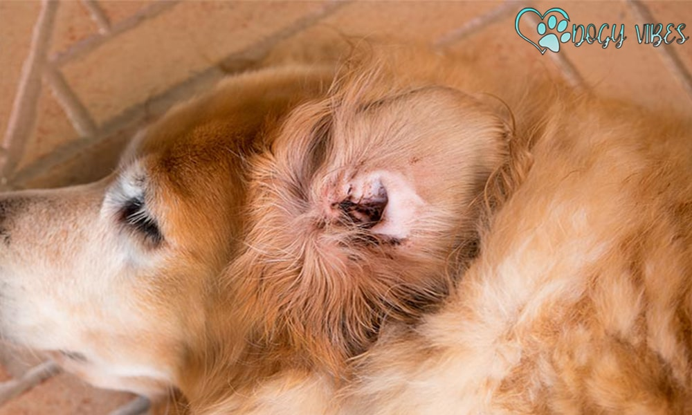 Stop a dog's ear from bleeding