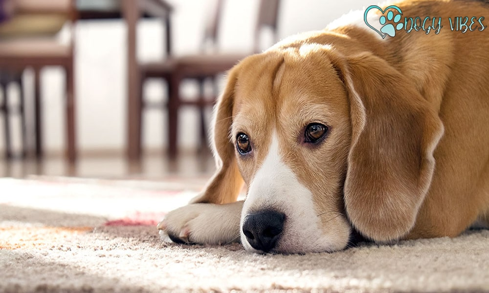 Treat neck pain in dogs caused by the injury