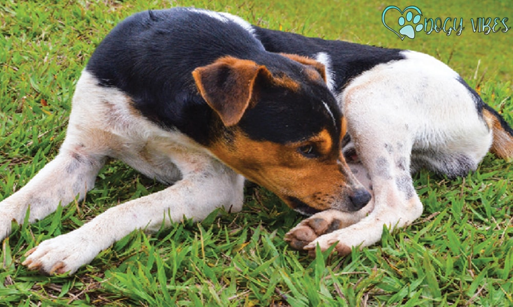 What are the causes of claw-licking behavior in dogs?