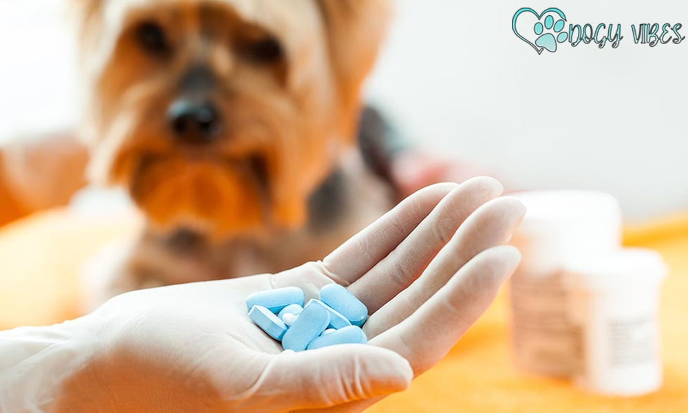What are the harms of vitamins and nutritional supplements on dogs?
