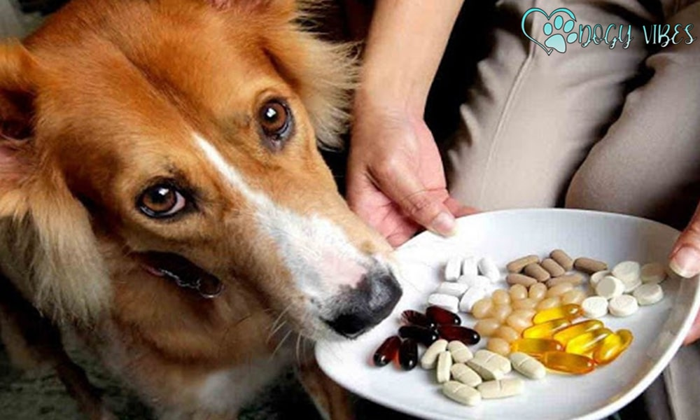 When do I know that my dog needs nutritional supplements?