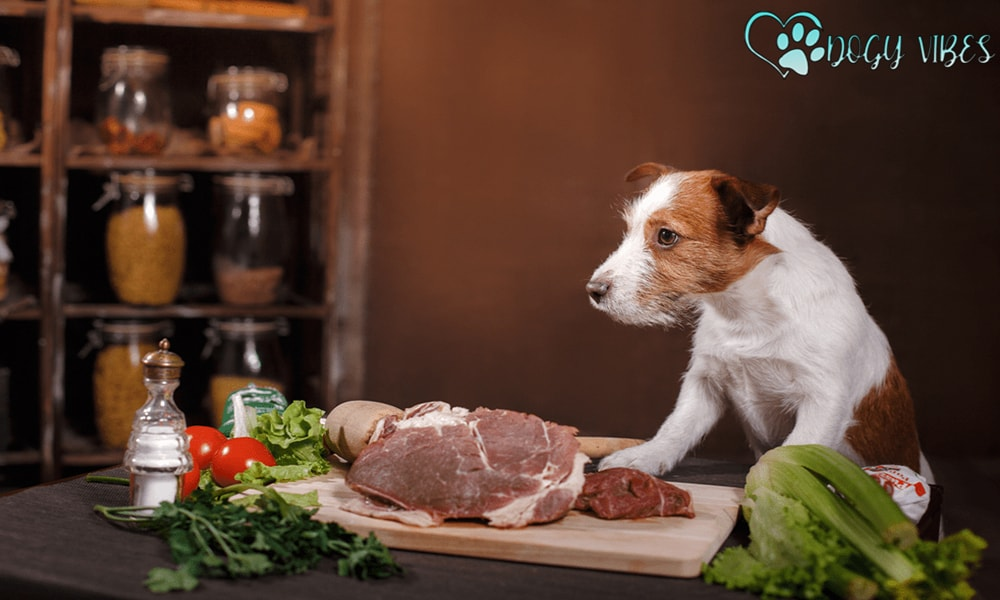 What are the disadvantages of Home Eating for Dogs